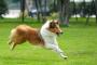 10 maneras de ayudar a mantener cómodo a tu perro artrítico