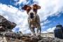 Cómo enseñar trucos nuevos a tu perro