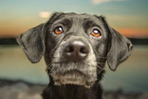 Todo sobre problemas gastrointestinales en perros: diarrea, vómitos, estreñimiento y más