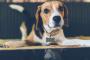 Guía paso a paso para dar medicina a su perro