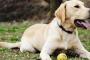 Agresión en perros (descripción general)