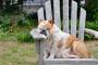 """Los mejores perros para personas perezosas (cuando """"quedarse"""" es fácil)"""