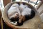 Beneficios de la esterilización en gatos machos y hembras