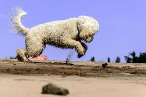 Cuatro formas naturales para mantener a las pulgas alejadas de tu perro de manera efectiva
