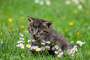 Atención médica de rutina de los gatos (1 parte)
