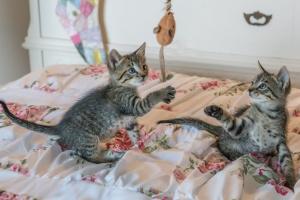 Tratamiento de problemas de comportamiento en gatos