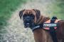 Cómo las redes sociales mantienen a las mascotas seguras
