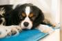 ¿Cual es la verdadera razón por la cual amamos a los perros?