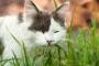 ¿Por qué tu gato come pasto o grama?