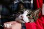 Cómo cortar las uñas de su gato adecuadamente