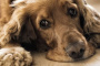 7 maneras de romper involuntariamente el espíritu de un perro