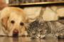 ¿Perros y gatos tienen recuerdos a largo plazo?