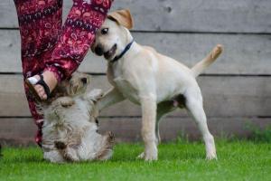 Parando peleas de perros