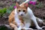 Los gatos y el trastorno obsesivo compulsivo