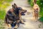 4 Riesgos relacionados con el calor en las mascotas que debe tener en cuenta.