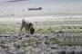 ¿Por qué los perros comen tierra? (La ciencia detrás de un hábito extraño)