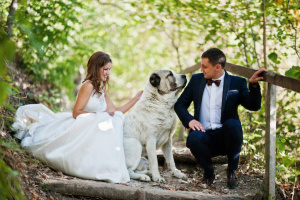 Cómo incluir tu perro en tu boda