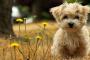 ¿Qué es la enfermedad del perro parvo?
