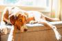 Creo que mi perro tiene autismo: 3 señales importantes (pero deja de preocuparte)