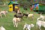 Ideas de patio trasero para perros