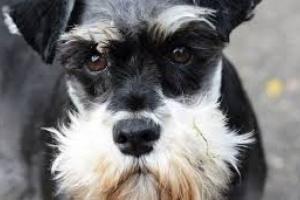 Baja producción de hormona paratiroidea en perros