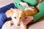 Cuidando al perro recuperado