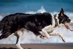 Especies de perro perfectas para corredores