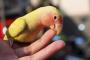 Problemas de comportamiento comunes en aves