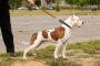 Entrenamiento de la correa para una mejor aptitud en los perros