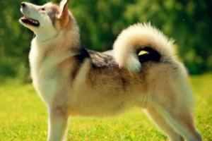 ¿Qué prefieren los perros? ¿Golosinas o alabanza?