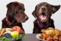 ¿Comida seca o húmeda? Cómo elegir lo mejor para las mascota
