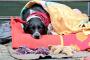 Clima frio y mascotas