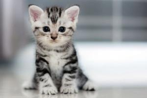 Cuidados básicos de tu gato