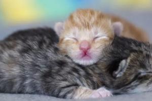 Controlando el desarrollo de su gatito