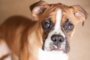 ¿Qué problema silencioso está afectado a su perro?