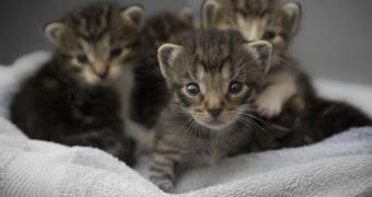 Pérdida de movimiento del cuerpo en gatos