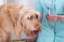 8 cosas para recordar cuando se lucha contra el cáncer en los perros
