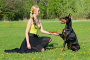 Cómo enseñar a un perro a estrechar la mano (los pasos esenciales)