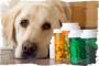 Tumores intestinales (apudomas) en perros