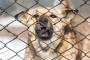 Agresión posesiva y territorial en perros