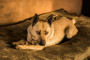 La falta de control de la vejiga en los perros