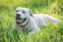 Tick parálisis en perros