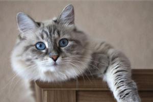10 reclamaciones de seguro de salud para gatos más caros