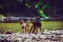 No permitas que beba agua del lago: las algas azul-verdes pueden ser mortales para los perros y otros animales