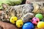 5 cosas que los gatos aman