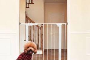 Seguridad para su perro, dentro y fuera