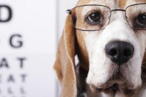 8 consejos principales para mantener a las mascotas felices y saludables