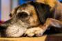 Enalapril para perros: usos, dosis y efectos secundarios.