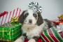 Mascotas como regalos: buenas intenciones, MALA IDEA.