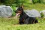 Toxinas del hígado en perros